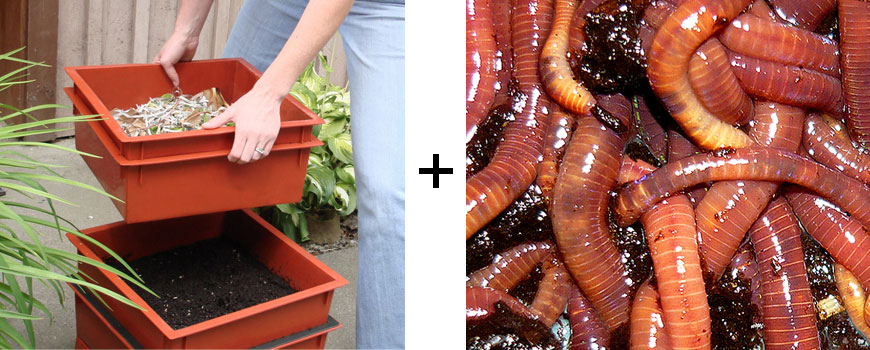 how to build a worm box for raising fishing worms